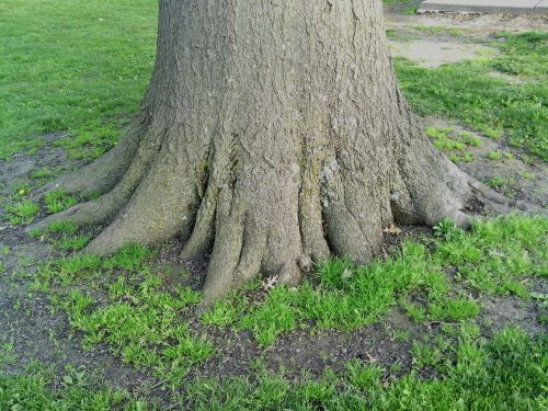 roots solid tree