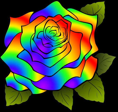 rosa flower rainbow