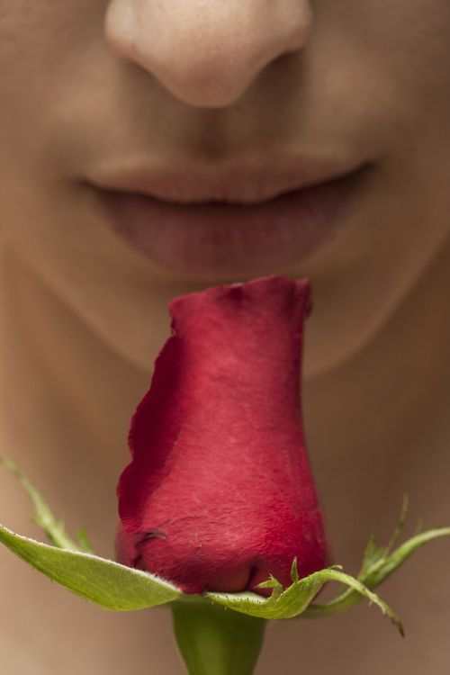 romance flower macro