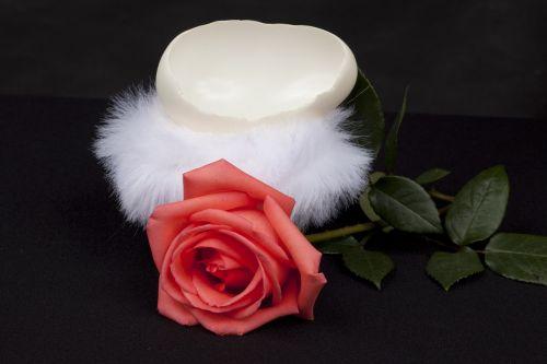rosa eggshell isolated
