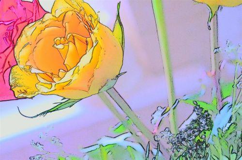 rosa yellow art