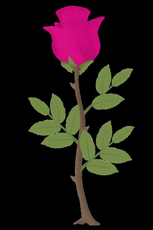 rosa flower roses