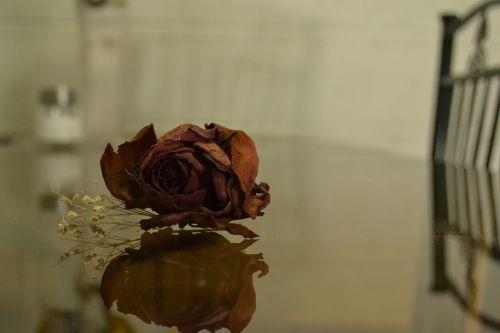 rosa romantic love