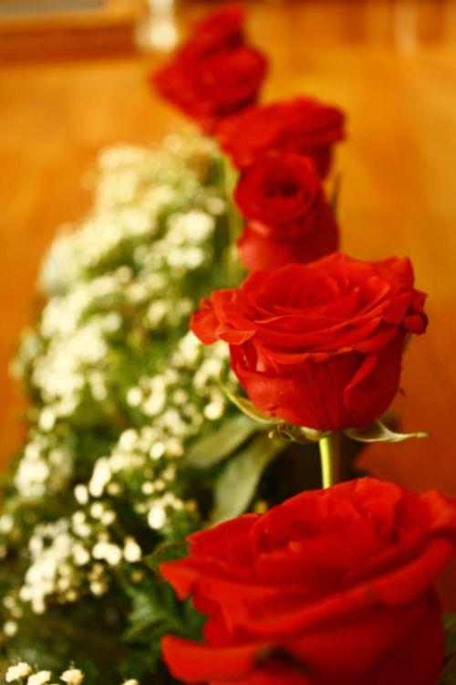 rosa roses flowers
