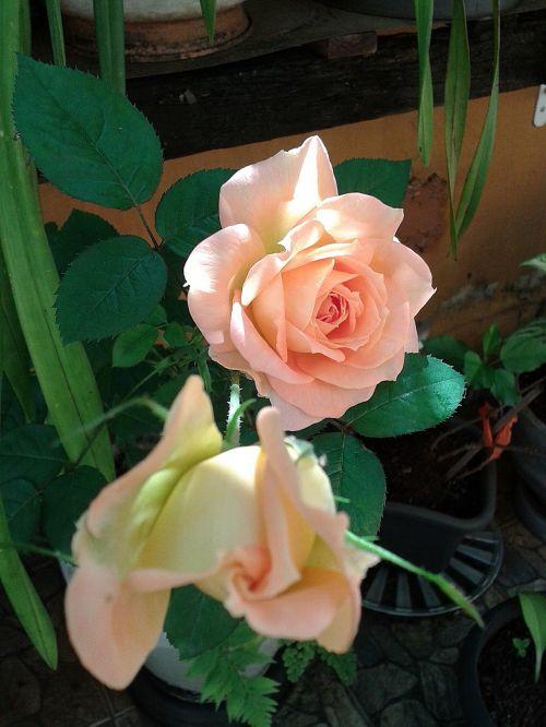 vase nature flower
