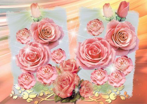 roses rosebud garden