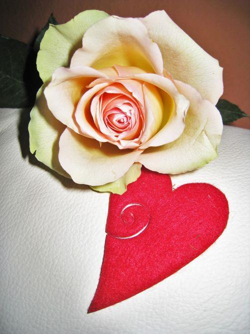 rose heart valentine's day