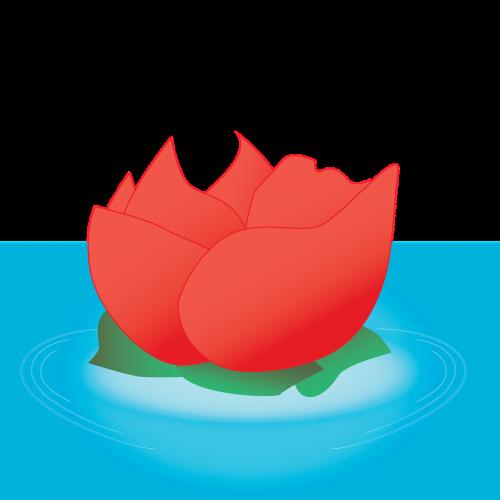 rose rose on water water rose