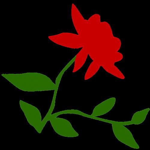 rose bloom love
