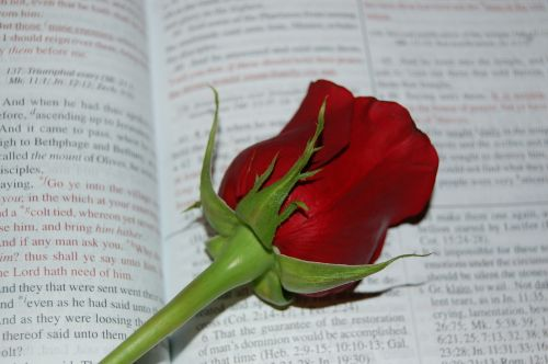 rose bible words