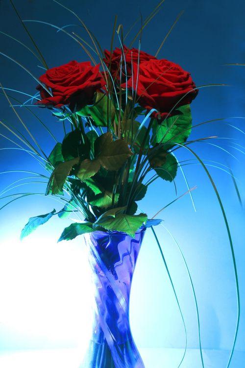 rose vase blue