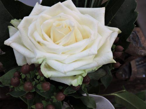 rose white wedding