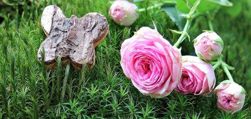 rose bush röschen moss