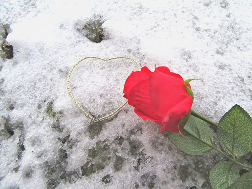 rose the heart of snow