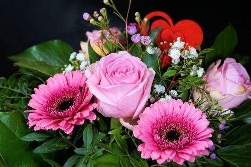 rose flower blossom