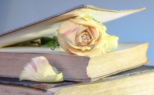 rose book old book