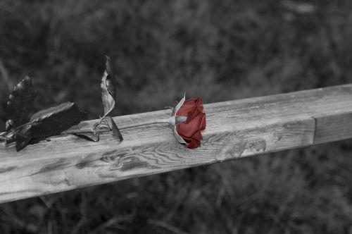 rose black and white railing
