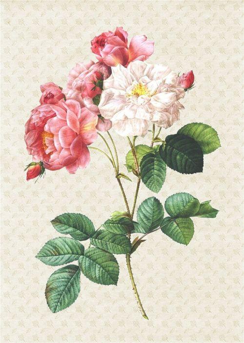 rose paper collage