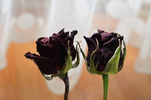 rose dried rose macro