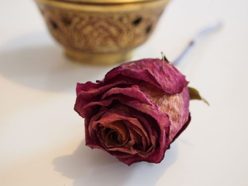 rose dried red