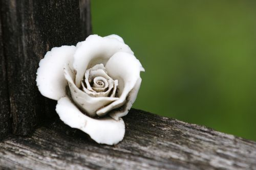 rose grave supplement blossom