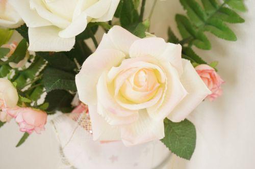 rose rosaceae pink