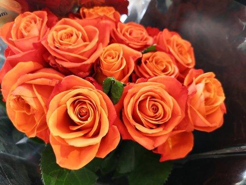 išaugo, meilė, Romantika, puokštė, Žiedlapis, gėlė, oranžinės spalvos rožės, rožės arti-iki, rožės