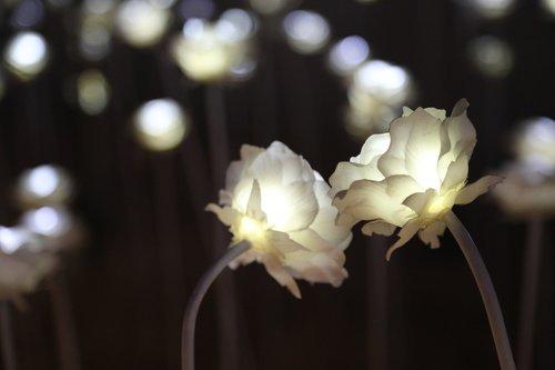 rose  lighting  light