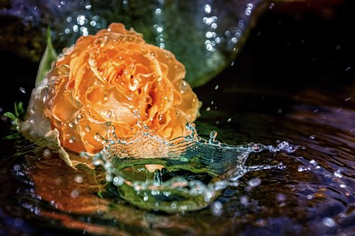 rose  fountain  water