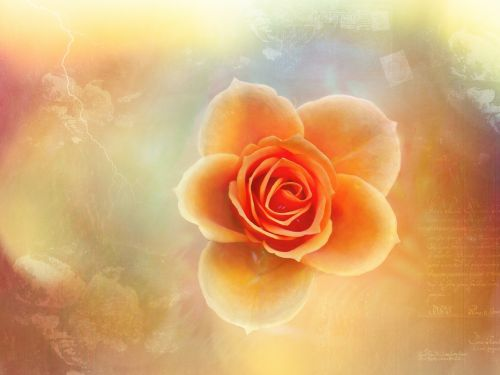 rose artistically creativity