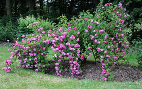 rose park blütenmeer
