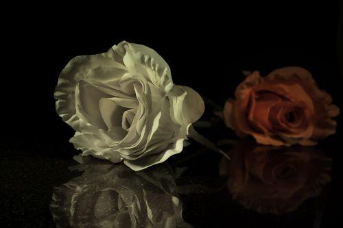 rose flower art flower
