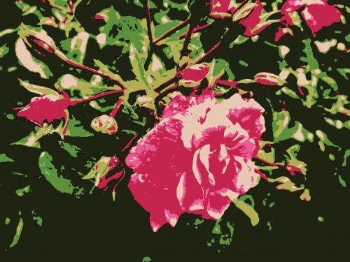 rose wild rose flower