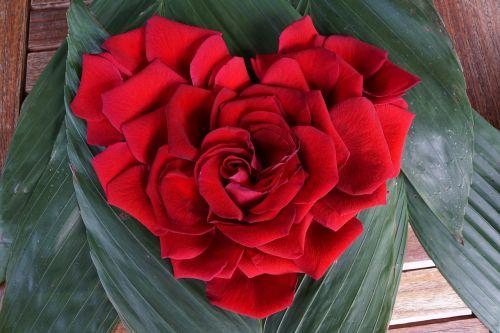 rose heart love