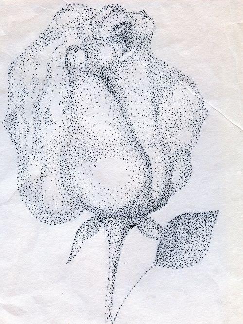 Rose By Brenda Marie