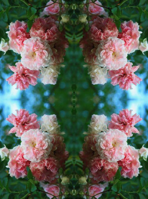 Rose Cluster Repeat