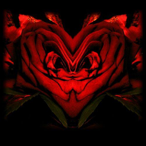 rožė, gėlė, lenkta, rose flex