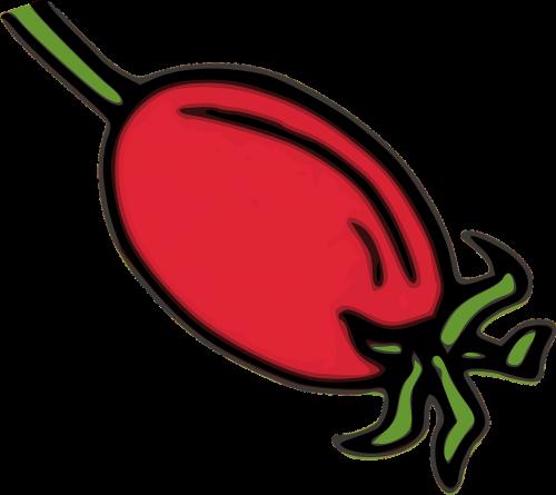 rose hip hip red