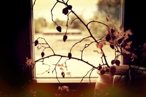 Rose Hip In Autumn