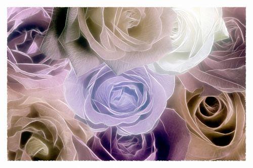Rose In Pose 46