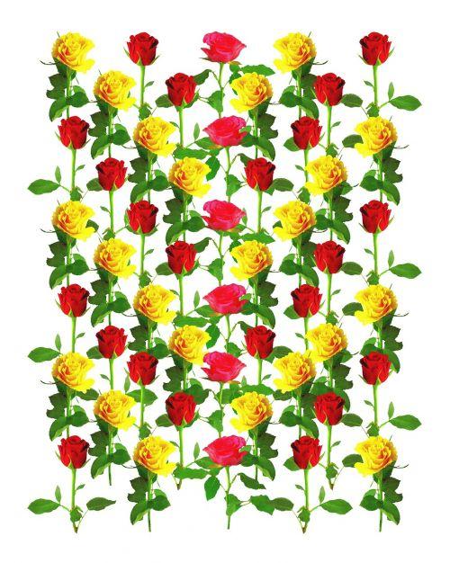 rose pattern roses background image
