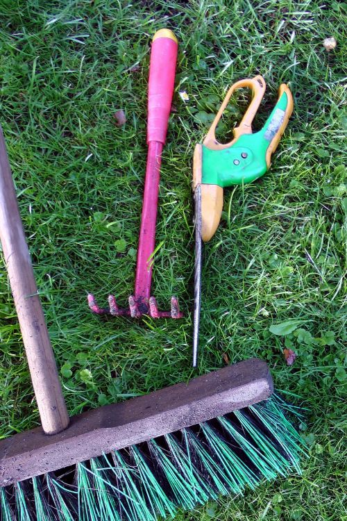 rose scissors garden tools allotment