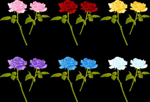 rose stem  roses  red