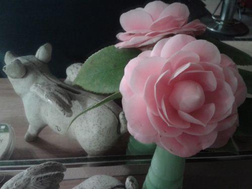 rose succulent plants rose