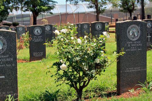Rosebush Between Graves