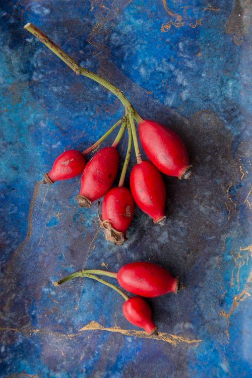 rosehip rosebush seed red