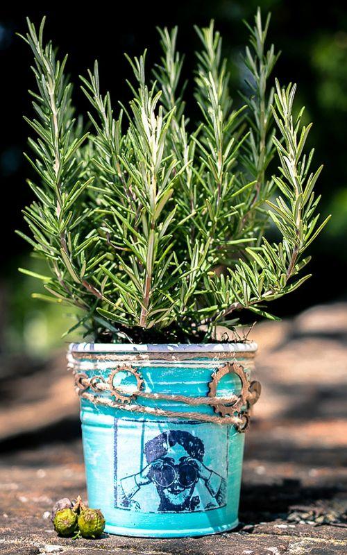 rosemary vase the jar of rosemary