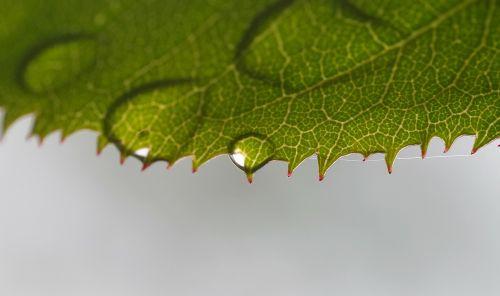 rosenblatt beaded drop of water