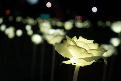 rose lights led