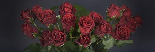 roses bouquet of roses bouquet